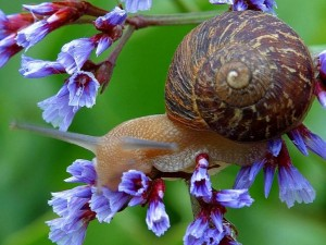 snail on flowers